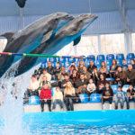 Обратная сторона дельфинариев