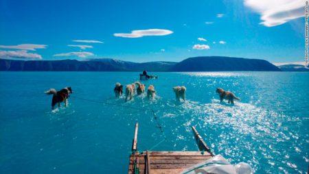 Фото упряжки ездовых собак в  море - доказывает реальность таяния ледяного щита Гренландии