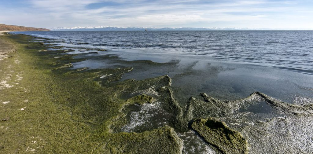 Baikal waters become toxic